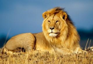 Fique de boa com o Leão da Receita Federal